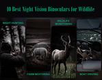 Best Night Vision Binoculars for Wildlife