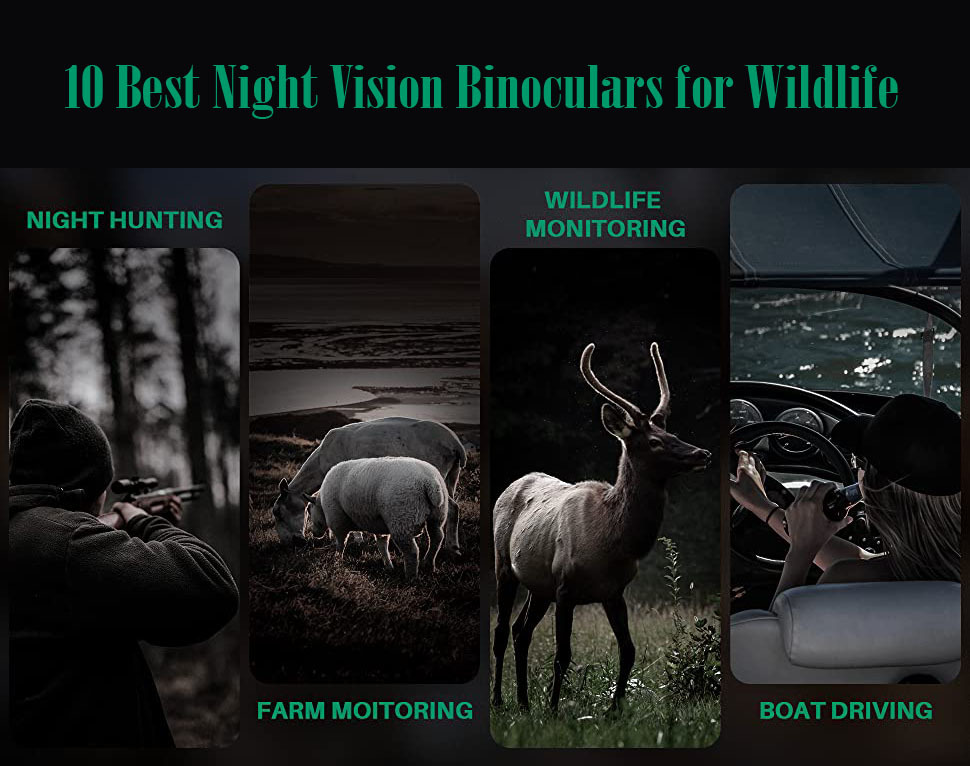 Best Night Vision Binoculars for Wildlife