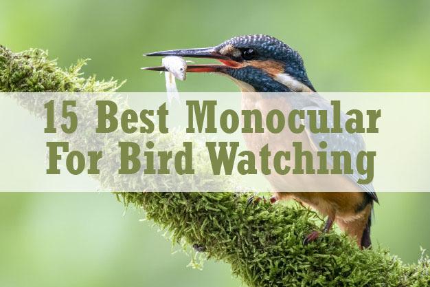 best monocular for bird watching
