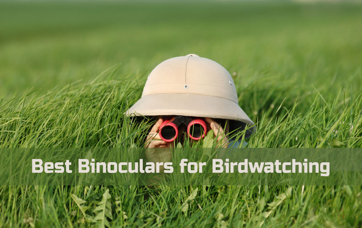 What Are the Best Binoculars for Birdwatching