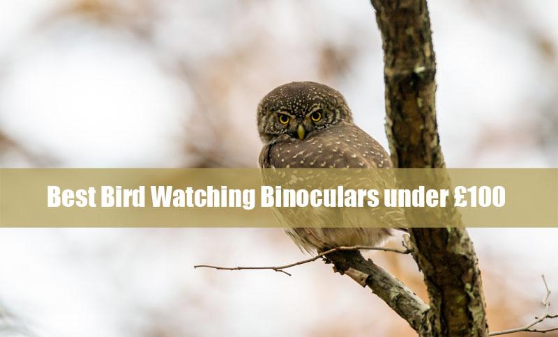 Best Bird Watching Binoculars under £100