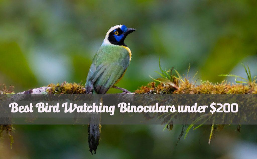 Best Bird Watching Binoculars under $200
