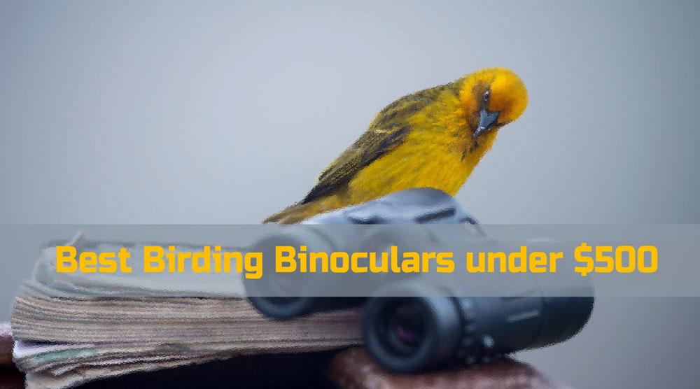 Best Birding Binoculars under $500