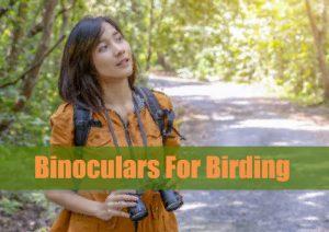 Best Small Binoculars For Birding