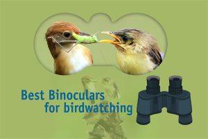 Best Binoculars for Birdwatching